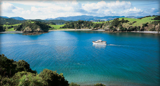 Cruising the Bay of Islands