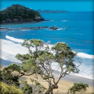Opua Coastal Walk